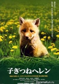 Helen the Baby Fox