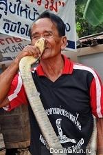 Бан Кок Са-На: Деревня Кобр (Таиланд)