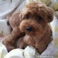 Собака Ким Хён Джуна