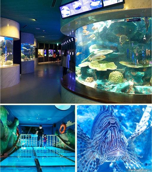 63 Sea World
