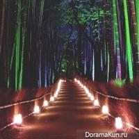 bamboo grove'