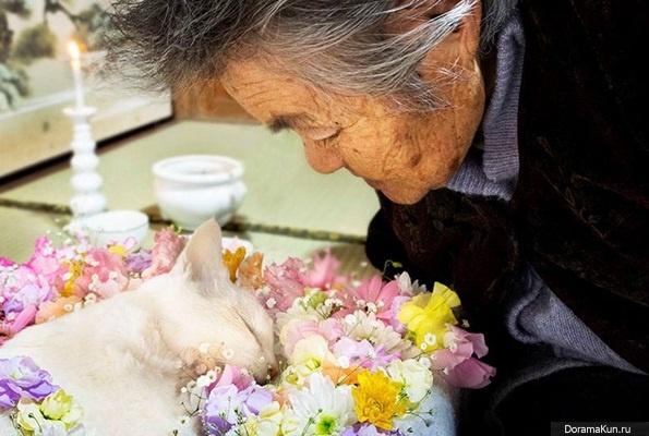 смерть коту фото
