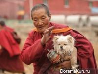 dogs of Tibet
