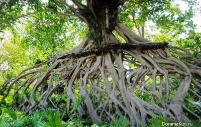 Strange Banyan