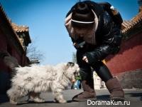 Cats - Fluffy guards Forbidden City