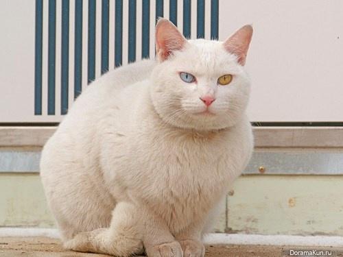 the cat Korea
