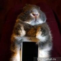 Rabbits and smartphones