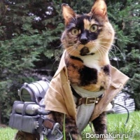 cosplay cat