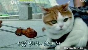 Longxing Temple cat