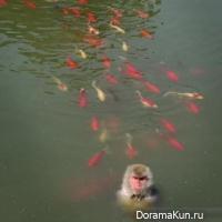 Wildlife Park Hefei
