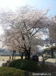 Весенний Тэгу