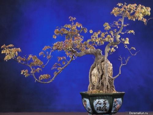 Япония. Сайкэй – искусство миниатюрного ландшафта