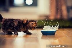 Японский котенок – самый симпатичный в мире!