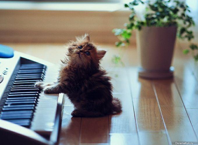 Котенок, клавишные, игривый, пушистый, сидеть, полы, синтезатор Обои 3840x2