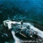 Kokia - ЯK STANDARD - Kanata Made