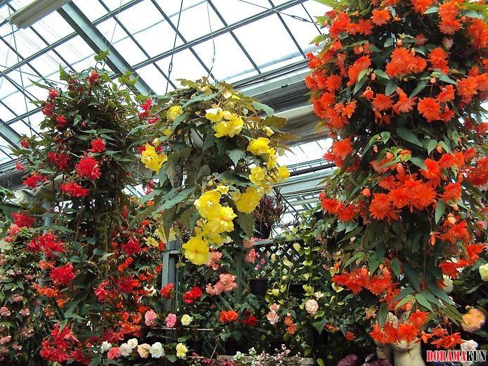Кавати фудзи сад сказочных цветов