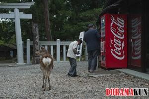 Япония. Нара.