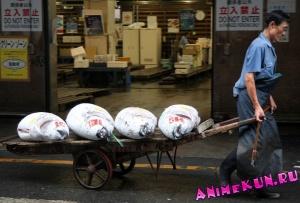 Япония. Рыбный рынок Цукидзи.