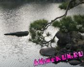 Япония. Сад Кю Сиба Рикю.