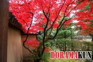 Япония. Храм Дайтокудзи.
