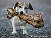 Китай. Еда из собак.