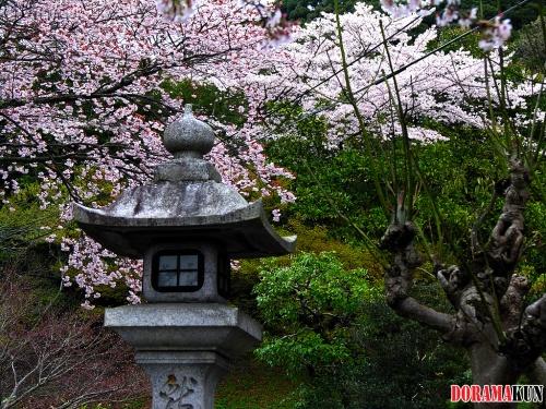 Япония. Район Тэцугаку. Философская тропа.