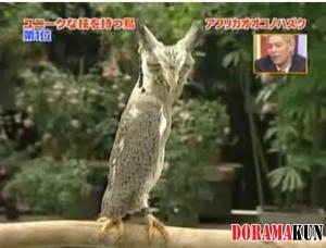 Хитрая сова