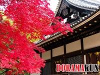 Япония. Храм Нинна-дзи.
