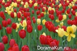Festival of tulips in Tkheana