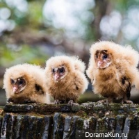 China rescue owls