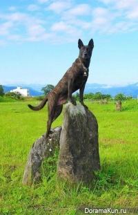The Taiwan dog
