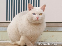 the cat Korea