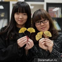 the drawings on the leaves of the tree Ginkgo