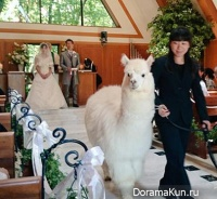 wedding with alpaca