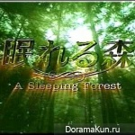 A Sleeping Forest